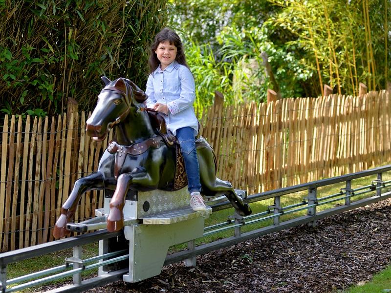 Horse riding paddock