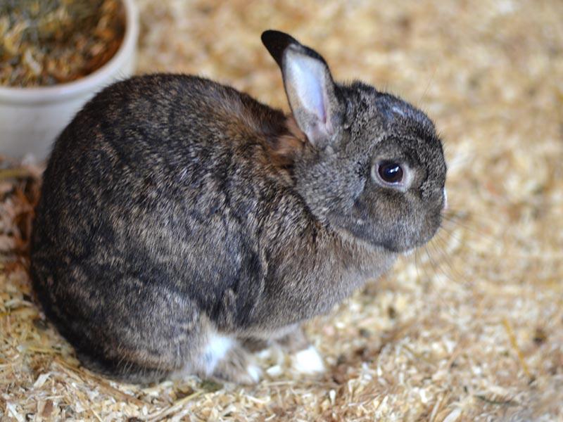 Tamme konijnen en cavia's