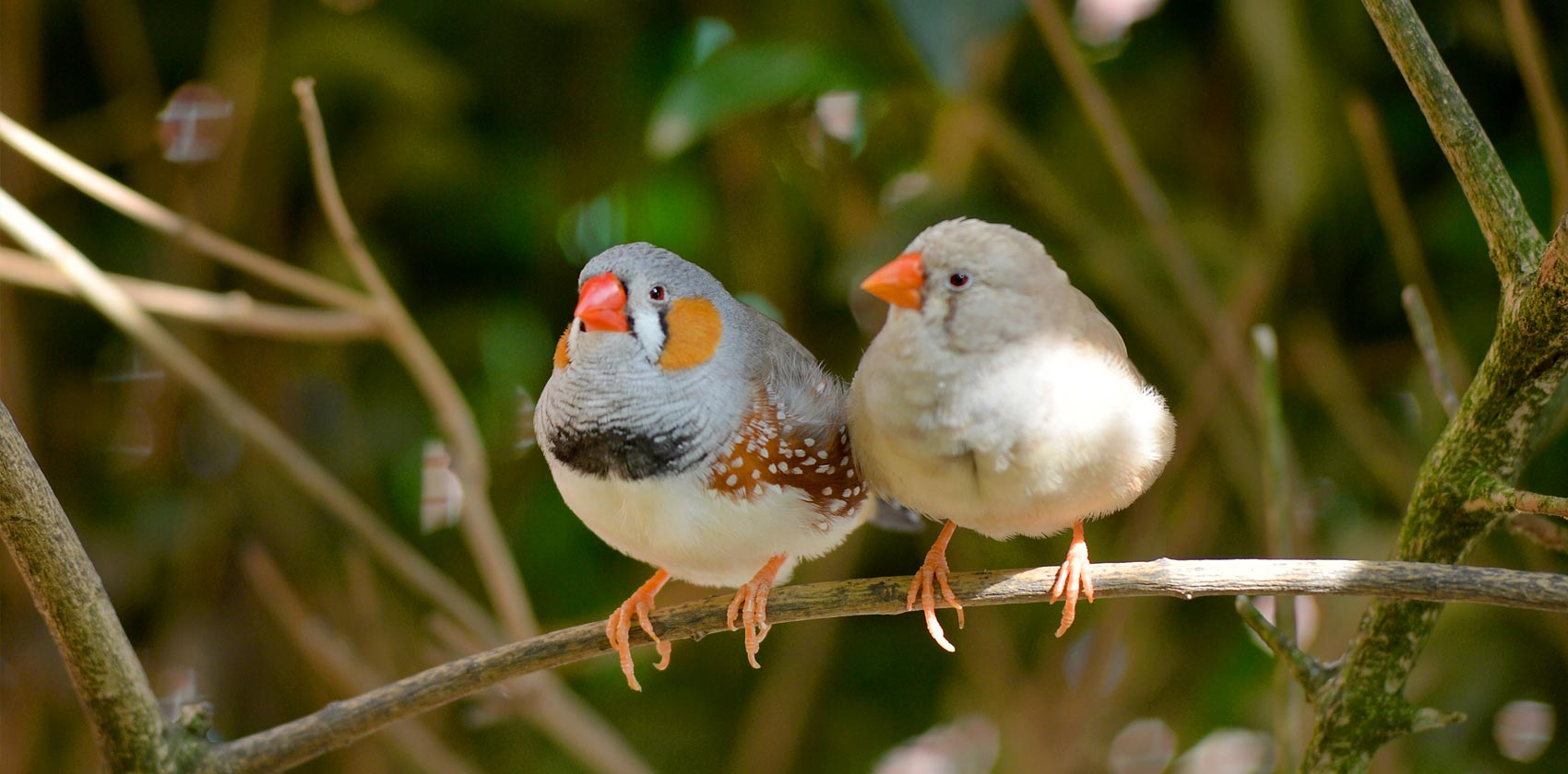 Vogels en papegaaien